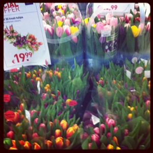 buckets of tulips in Schipol